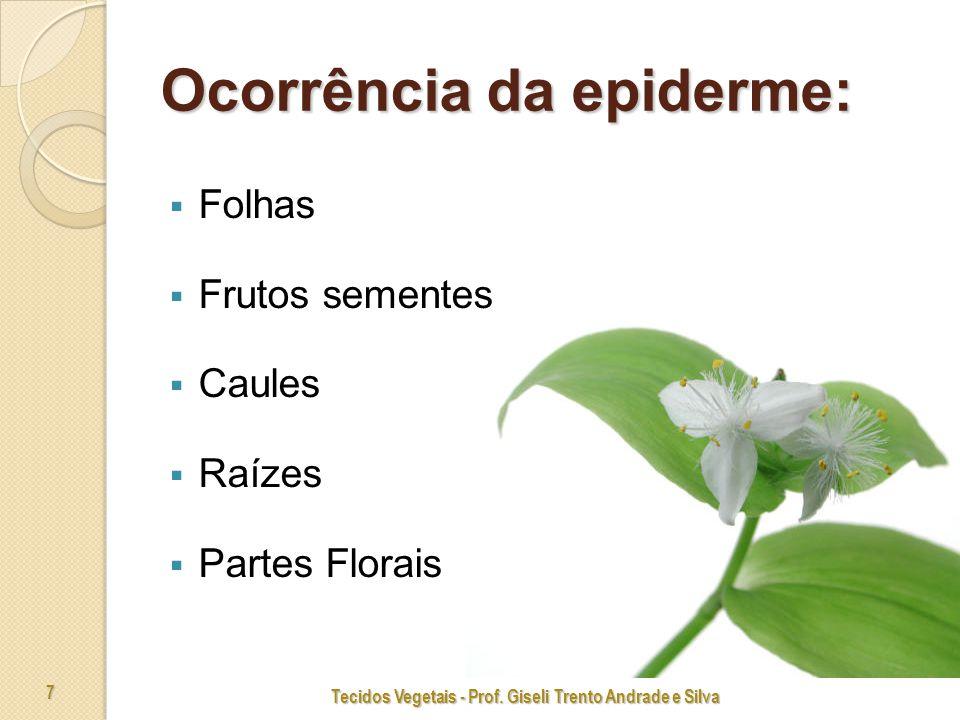 7 Ocorrência da epiderme: Folhas Frutos sementes Caules Raízes Partes Florais