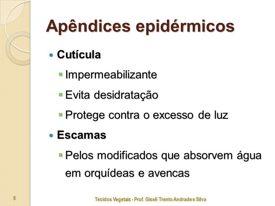 Tecidos Vegetais - Prof. Giseli Trento Andrade e Silva 19
