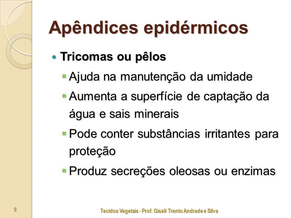 Tecidos Vegetais - Prof. Giseli Trento Andrade e Silva 50