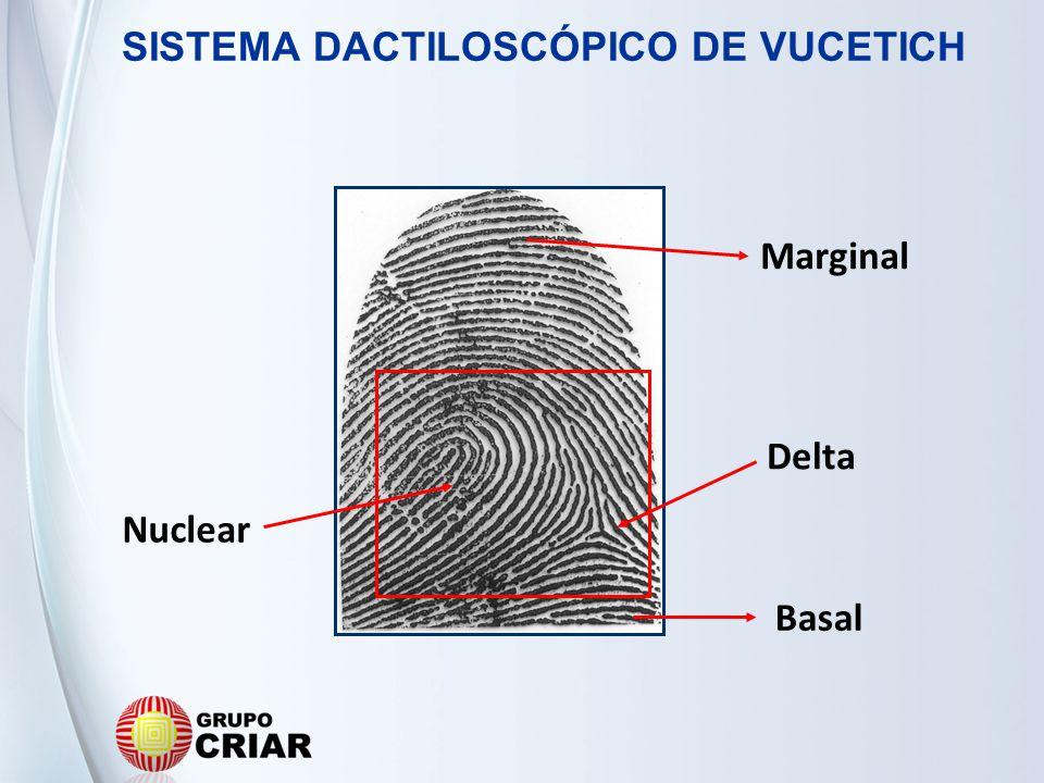 Nuclear Basal Marginal Delta SISTEMA DACTILOSCÓPICO DE VUCETICH