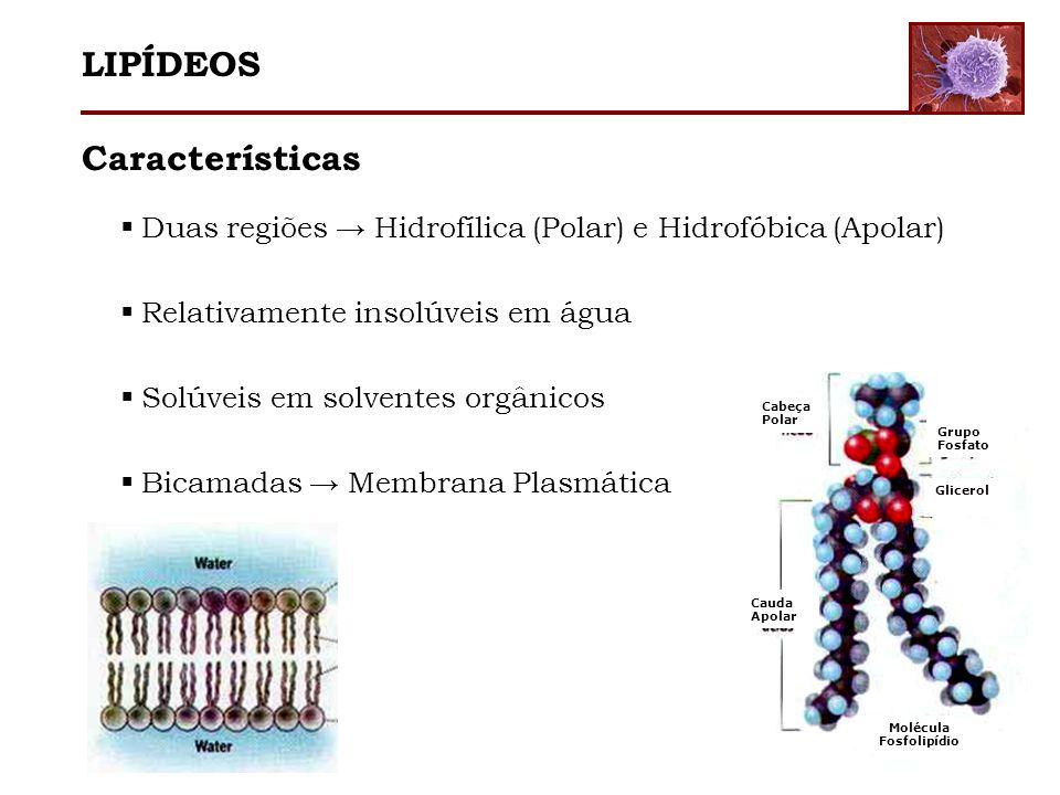 Características Duas regiões Hidrofílica (Polar) e Hidrofóbica (Apolar) Relativamente insolúveis em água Solúveis em solventes orgânicos Bicamadas Mem