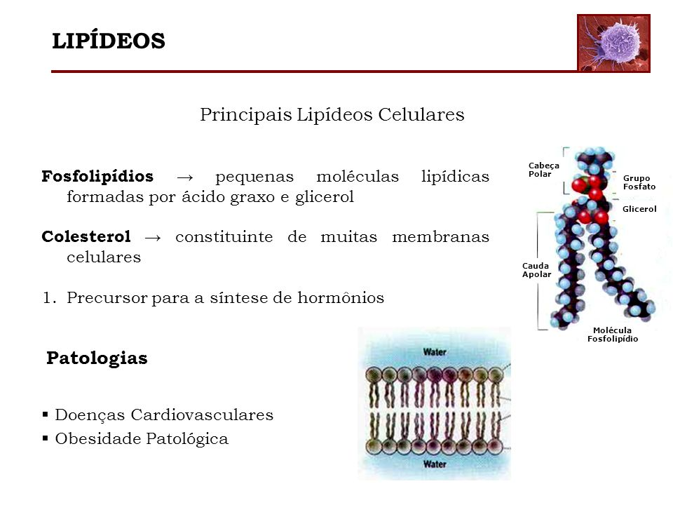 Principais Lipídeos Celulares Cabeça Polar Cauda Apolar Grupo Fosfato Glicerol Molécula Fosfolipídio Fosfolipídios pequenas moléculas lipídicas formad