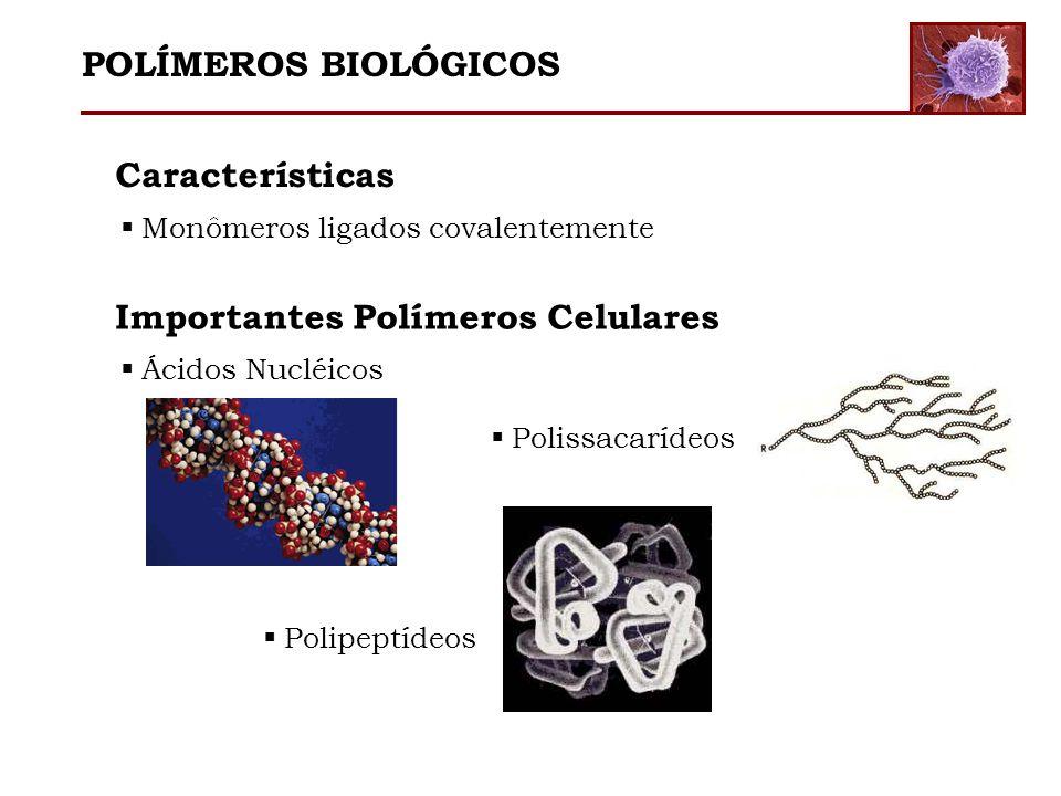 Características Monômeros ligados covalentemente Importantes Polímeros Celulares Ácidos Nucléicos Polissacarídeos Polipeptídeos POLÍMEROS BIOLÓGICOS