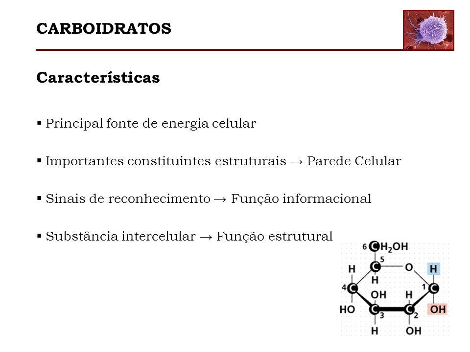Características Principal fonte de energia celular Importantes constituintes estruturais Parede Celular Sinais de reconhecimento Função informacional