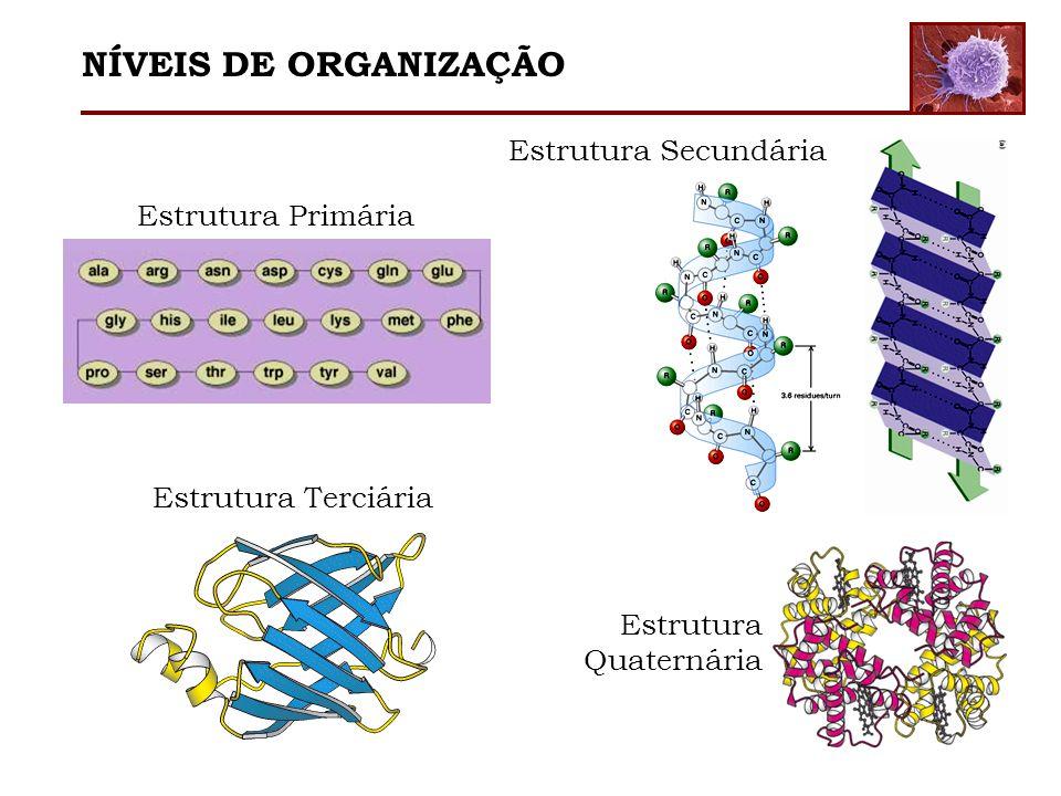 Estrutura Primária Estrutura Secundária Estrutura Terciária Estrutura Quaternária NÍVEIS DE ORGANIZAÇÃO