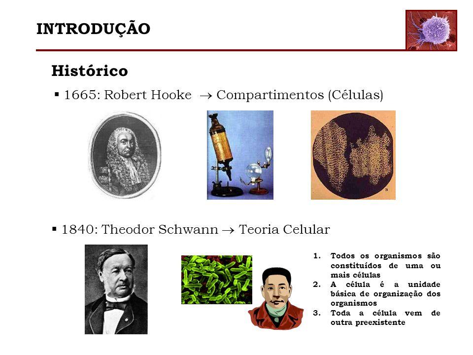 Histórico 1665: Robert Hooke Compartimentos (Células) 1840: Theodor Schwann Teoria Celular 1.Todos os organismos são constituídos de uma ou mais célul