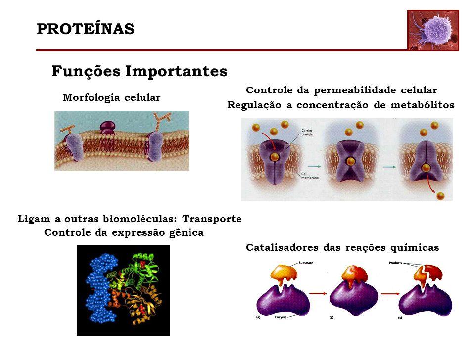 Funções Importantes Morfologia celular Catalisadores das reações químicas Controle da permeabilidade celular Regulação a concentração de metabólitos L