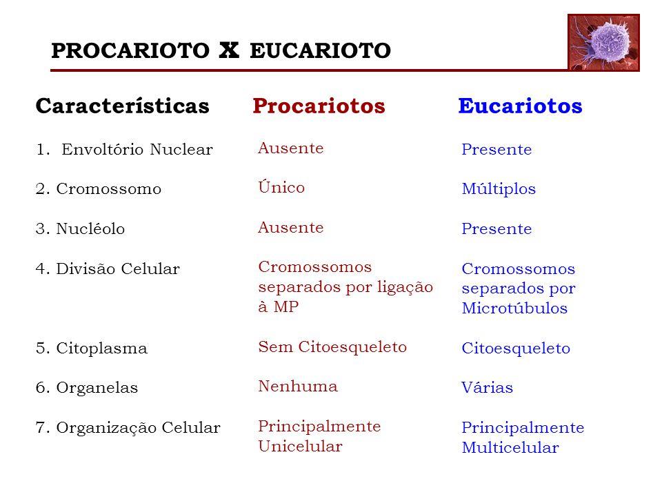 Características Procariotos Eucariotos 1.Envoltório Nuclear 2. Cromossomo 3. Nucléolo 4. Divisão Celular 5. Citoplasma 6. Organelas 7. Organização Cel