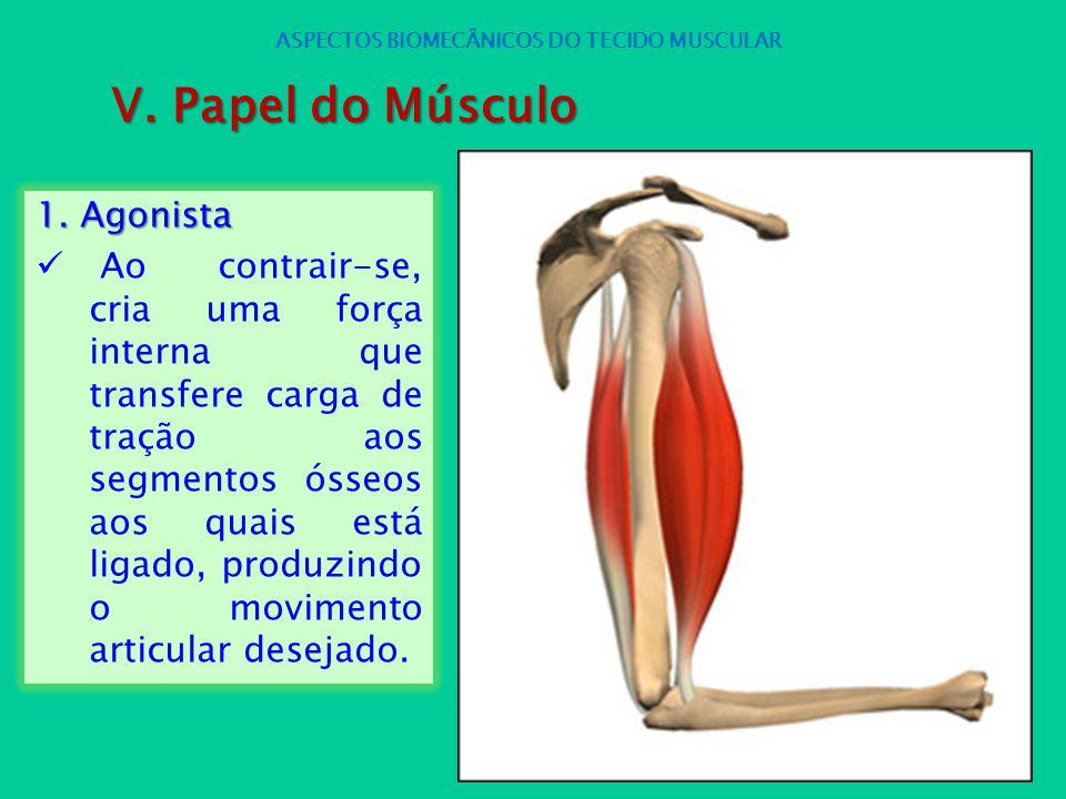 1. Agonista Ao contrair-se, cria uma força interna que transfere carga de tração aos segmentos ósseos aos quais está ligado, produzindo o movimento ar