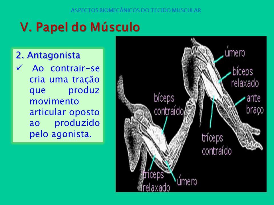 2. Antagonista Ao contrair-se cria uma tração que produz movimento articular oposto ao produzido pelo agonista. ASPECTOS BIOMECÂNICOS DO TECIDO MUSCUL