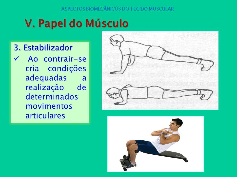 3. Estabilizador Ao contrair-se cria condições adequadas a realização de determinados movimentos articulares ASPECTOS BIOMECÂNICOS DO TECIDO MUSCULAR