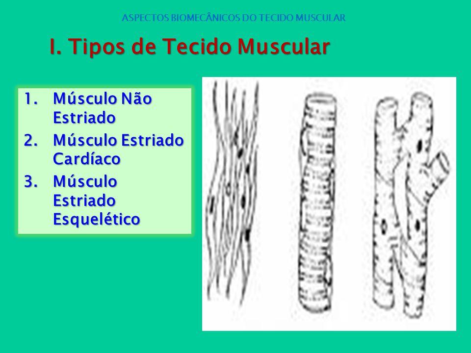 1.Músculo Não Estriado 2.Músculo Estriado Cardíaco 3.Músculo Estriado Esquelético ASPECTOS BIOMECÂNICOS DO TECIDO MUSCULAR I. Tipos de Tecido Muscular