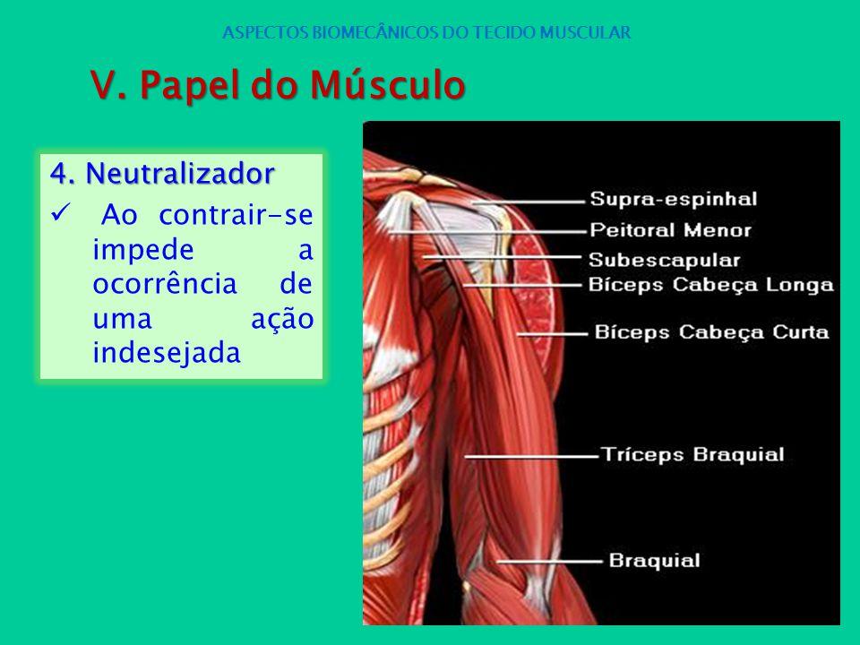 4. Neutralizador Ao contrair-se impede a ocorrência de uma ação indesejada ASPECTOS BIOMECÂNICOS DO TECIDO MUSCULAR V. Papel do Músculo