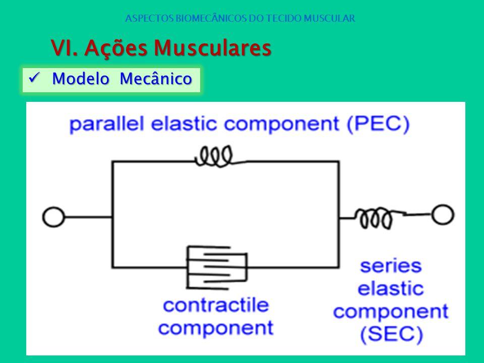 Modelo Mecânico Modelo Mecânico ASPECTOS BIOMECÂNICOS DO TECIDO MUSCULAR VI. Ações Musculares