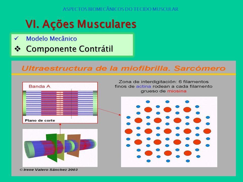 Modelo Mecânico Modelo Mecânico Componente Contrátil Componente Contrátil ASPECTOS BIOMECÂNICOS DO TECIDO MUSCULAR VI. Ações Musculares
