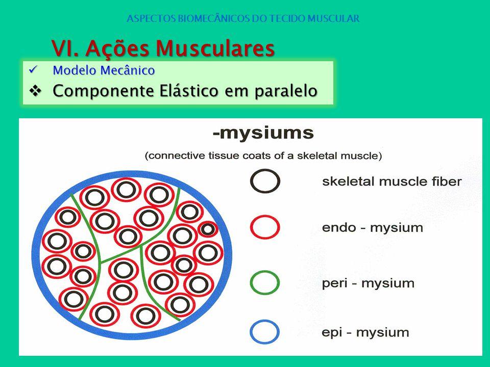 Modelo Mecânico Modelo Mecânico Componente Elástico em paralelo Componente Elástico em paralelo ASPECTOS BIOMECÂNICOS DO TECIDO MUSCULAR VI. Ações Mus