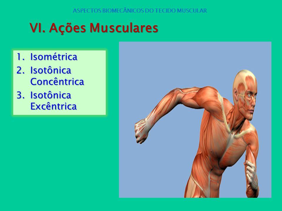 1.Isométrica 2.Isotônica Concêntrica 3.Isotônica Excêntrica ASPECTOS BIOMECÂNICOS DO TECIDO MUSCULAR VI. Ações Musculares