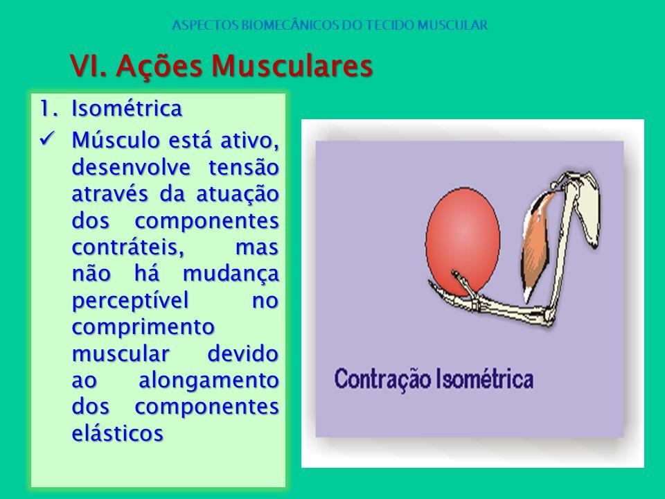 1.Isométrica Músculo está ativo, desenvolve tensão através da atuação dos componentes contráteis, mas não há mudança perceptível no comprimento muscul