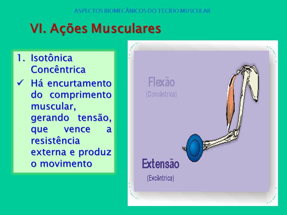 1.Isotônica Concêntrica Há encurtamento do comprimento muscular, gerando tensão, que vence a resistência externa e produz o movimento Há encurtamento