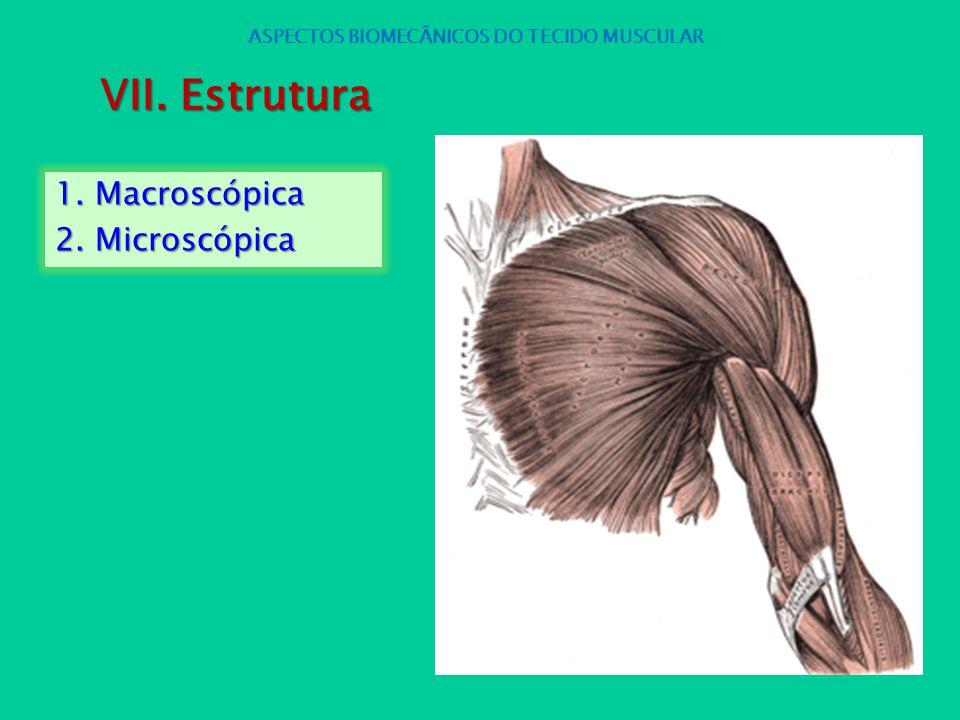 1. Macroscópica 2. Microscópica ASPECTOS BIOMECÂNICOS DO TECIDO MUSCULAR VII. Estrutura