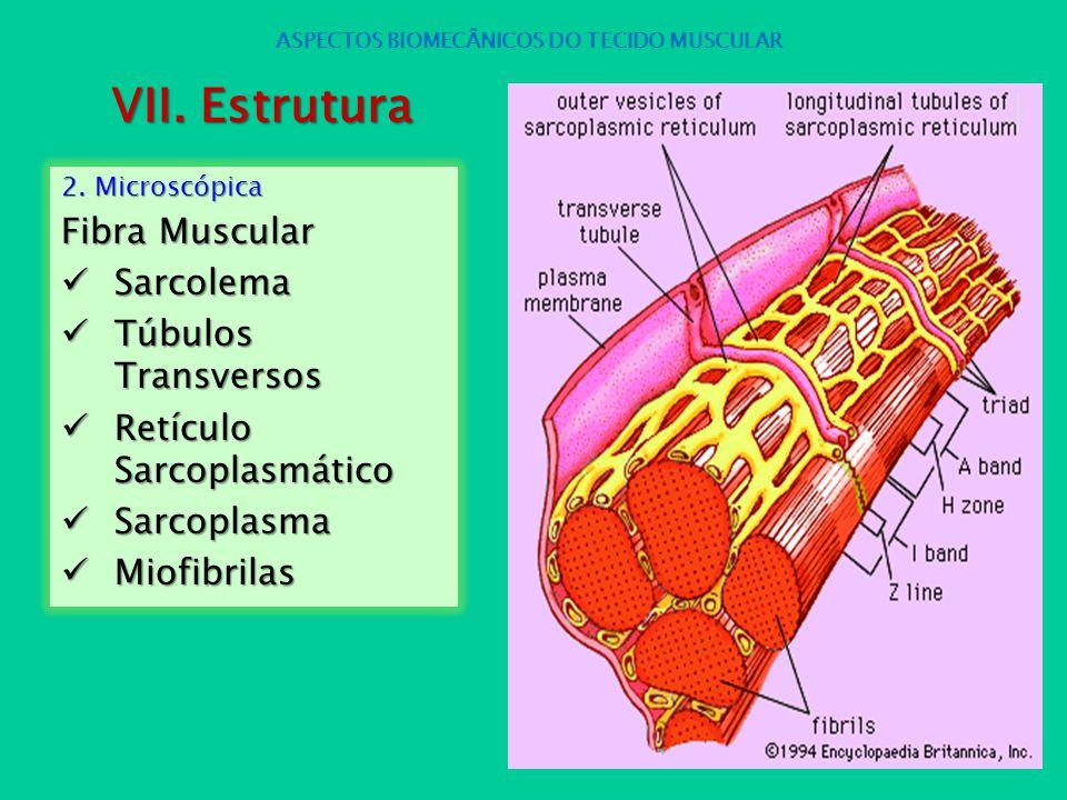 2. Microscópica Fibra Muscular Sarcolema Sarcolema Túbulos Transversos Túbulos Transversos Retículo Sarcoplasmático Retículo Sarcoplasmático Sarcoplas