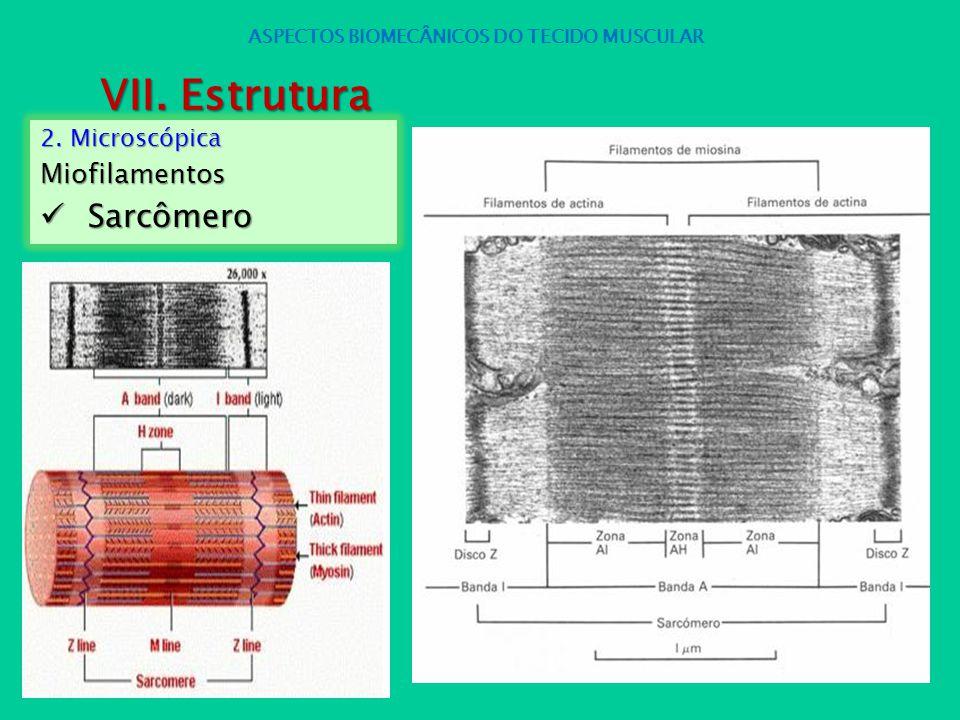 2. Microscópica Miofilamentos Sarcômero Sarcômero ASPECTOS BIOMECÂNICOS DO TECIDO MUSCULAR VII. Estrutura