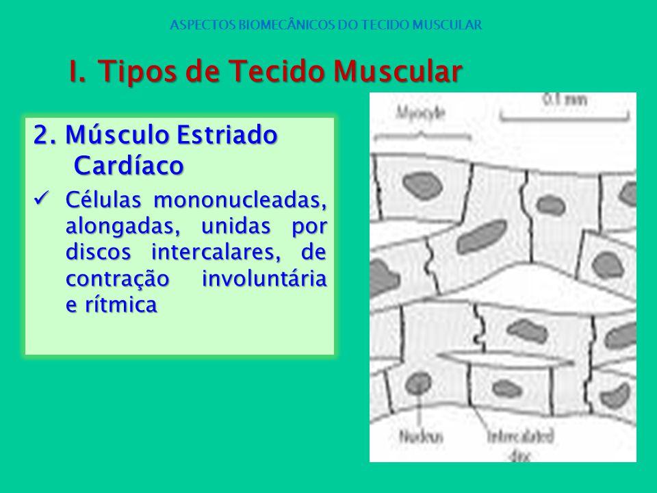 2. Músculo Estriado Cardíaco Células mononucleadas, alongadas, unidas por discos intercalares, de contração involuntária e rítmica Células mononuclead