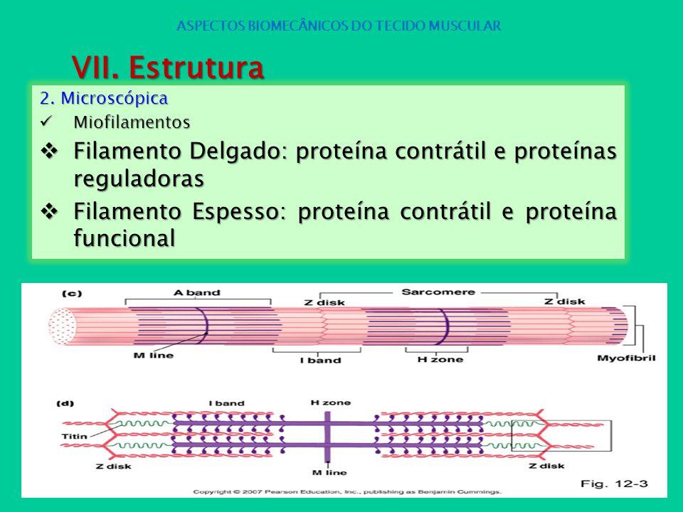 2. Microscópica Miofilamentos Miofilamentos Filamento Delgado: proteína contrátil e proteínas reguladoras Filamento Delgado: proteína contrátil e prot