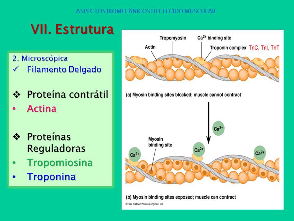 2. Microscópica Filamento Delgado Filamento Delgado Proteína contrátil Proteína contrátil Actina Actina Proteínas Reguladoras Proteínas Reguladoras Tr