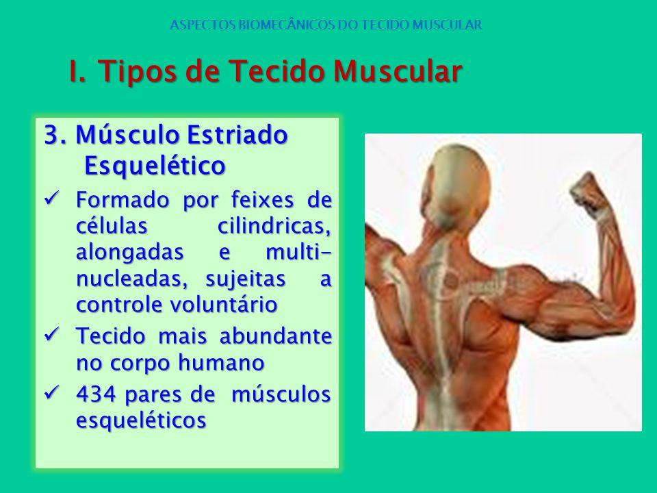 3. Músculo Estriado Esquelético Formado por feixes de células cilindricas, alongadas e multi- nucleadas, sujeitas a controle voluntário Formado por fe