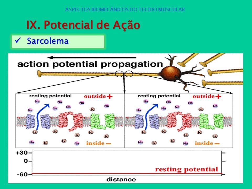 Sarcolema Sarcolema ASPECTOS BIOMECÂNICOS DO TECIDO MUSCULAR IX. Potencial de Ação