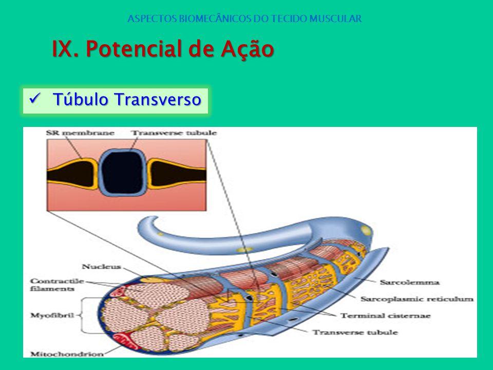 Túbulo Transverso Túbulo Transverso ASPECTOS BIOMECÂNICOS DO TECIDO MUSCULAR IX. Potencial de Ação