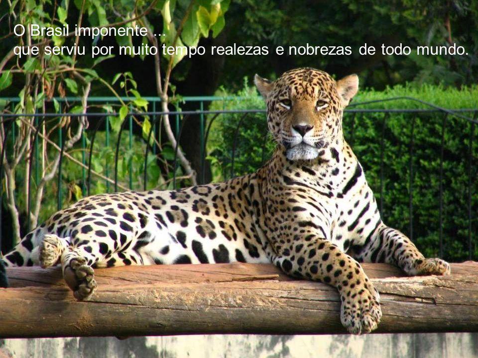 O Brasil da grande biodiversidade, abrigando 20% de todas as espécies vegetais e animais do planeta Terra.