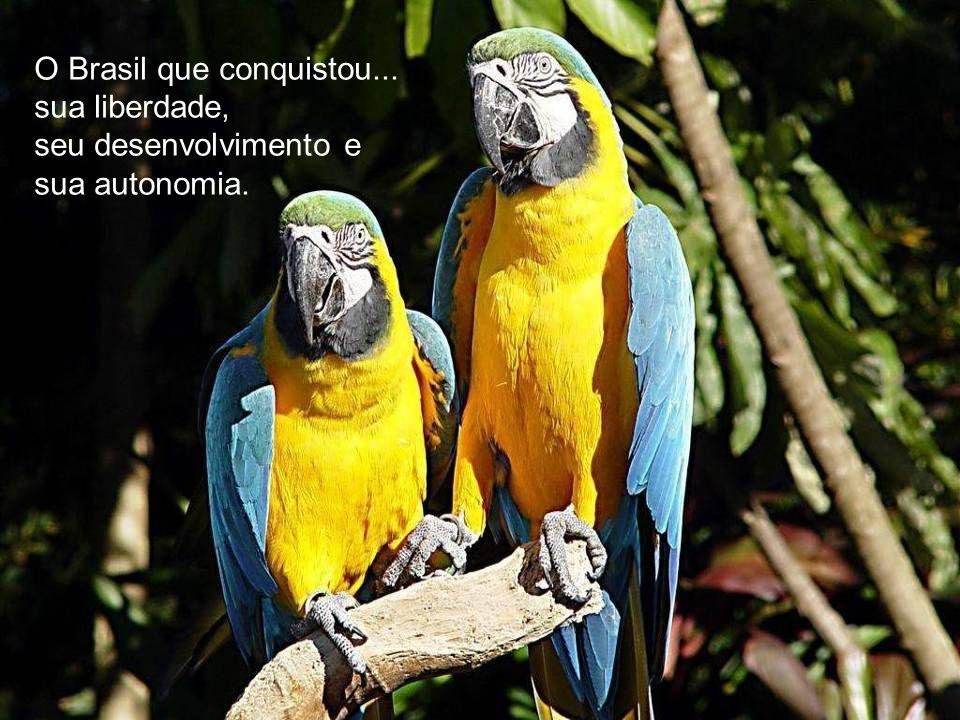 O Brasil imponente... que serviu por muito tempo realezas e nobrezas de todo mundo.