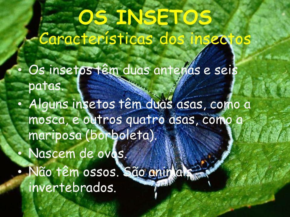 OS INSETOS Características dos insectos Os insetos têm duas antenas e seis patas. Alguns insetos têm duas asas, como a mosca, e outros quatro asas, co
