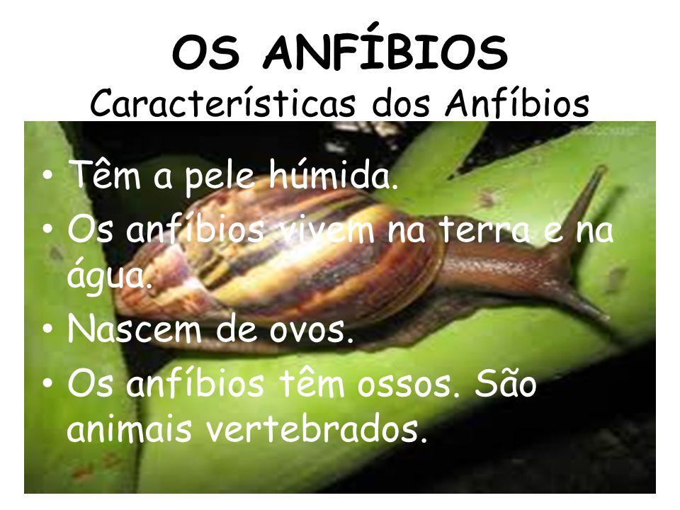 OS ANFÍBIOS Características dos Anfíbios Têm a pele húmida. Os anfíbios vivem na terra e na água. Nascem de ovos. Os anfíbios têm ossos. São animais v