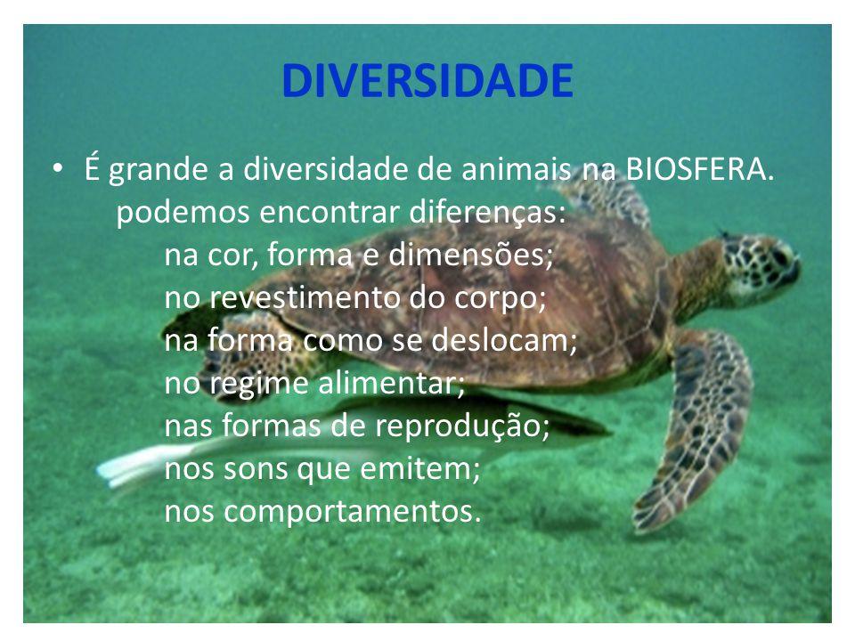 DIVERSIDADE É grande a diversidade de animais na BIOSFERA. podemos encontrar diferenças: na cor, forma e dimensões; no revestimento do corpo; na forma