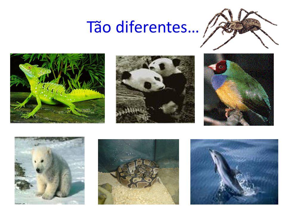 Tão diferentes…