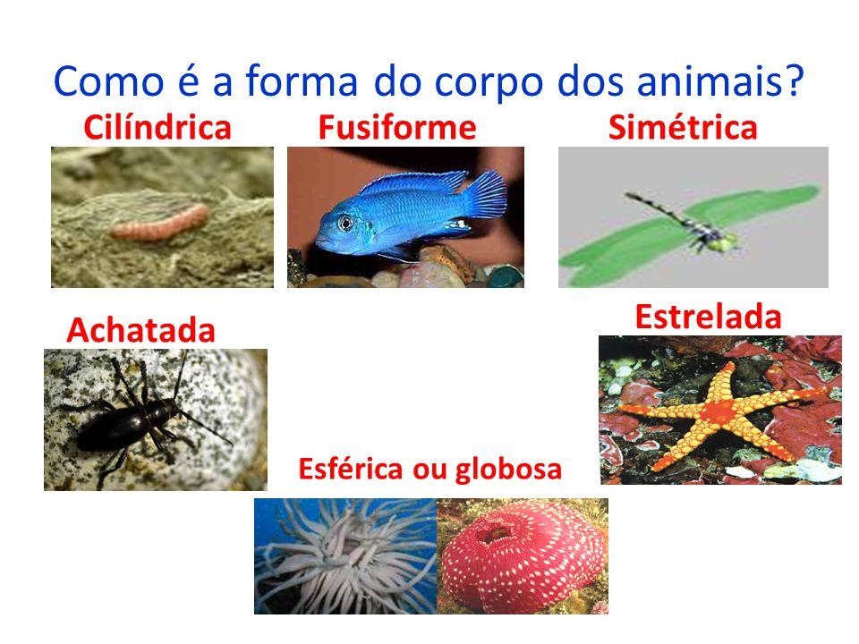 Como é a forma do corpo dos animais? Cilíndrica Fusiforme Simétrica Achatada Estrelada Esférica ou globosa