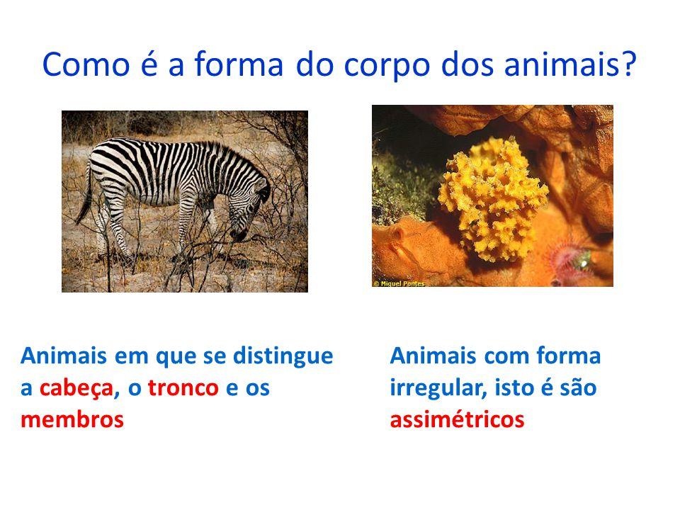 Como é a forma do corpo dos animais? Animais em que se distingue a cabeça, o tronco e os membros Animais com forma irregular, isto é são assimétricos