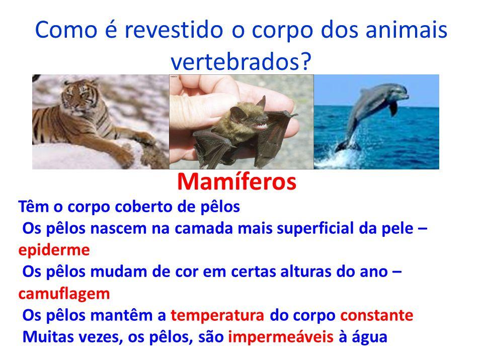 Como é revestido o corpo dos animais vertebrados? Mamíferos Têm o corpo coberto de pêlos Os pêlos nascem na camada mais superficial da pele – epiderme