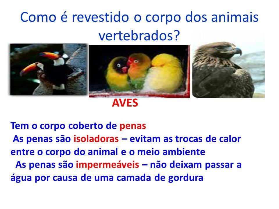 Como é revestido o corpo dos animais vertebrados? AVES Tem o corpo coberto de penas As penas são isoladoras – evitam as trocas de calor entre o corpo