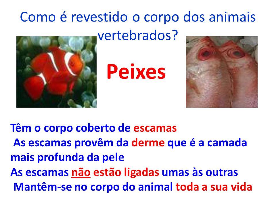 Como é revestido o corpo dos animais vertebrados? Peixes Têm o corpo coberto de escamas As escamas provêm da derme que é a camada mais profunda da pel