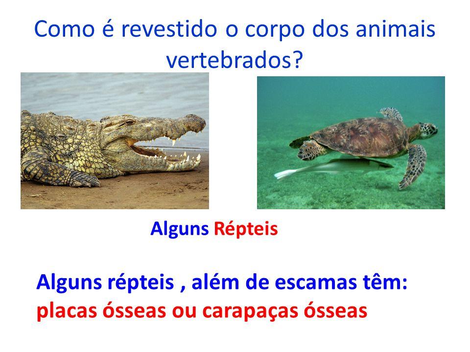 Como é revestido o corpo dos animais vertebrados? Alguns Répteis Alguns répteis, além de escamas têm: placas ósseas ou carapaças ósseas