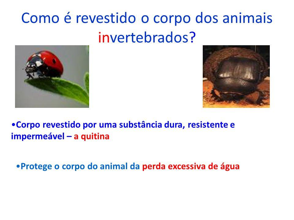 Como é revestido o corpo dos animais invertebrados? Corpo revestido por uma substância dura, resistente e impermeável – a quitina Protege o corpo do a