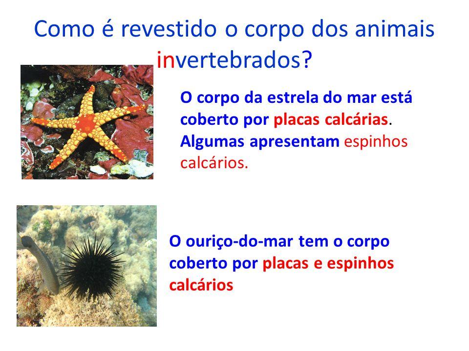 Como é revestido o corpo dos animais invertebrados? O corpo da estrela do mar está coberto por placas calcárias. Algumas apresentam espinhos calcários
