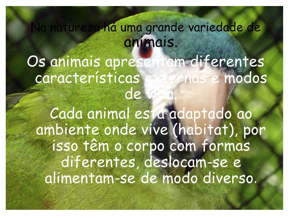 Na natureza há uma grande variedade de animais. Os animais apresentam diferentes características externas e modos de vida. Cada animal está adaptado a