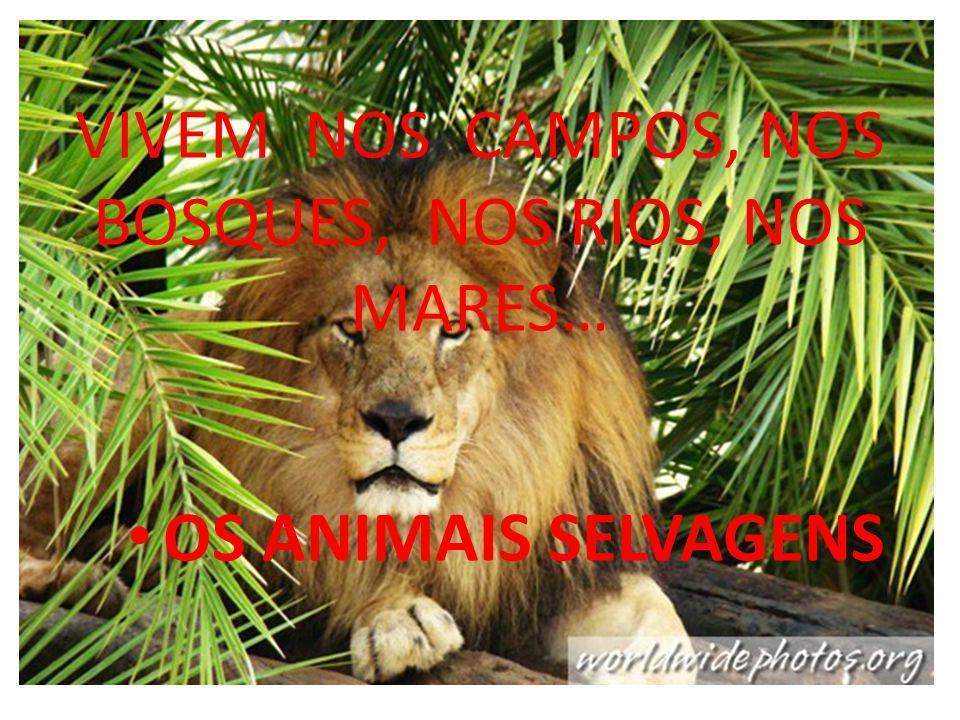 VIVEM NOS CAMPOS, NOS BOSQUES, NOS RIOS, NOS MARES… OS ANIMAIS SELVAGENS
