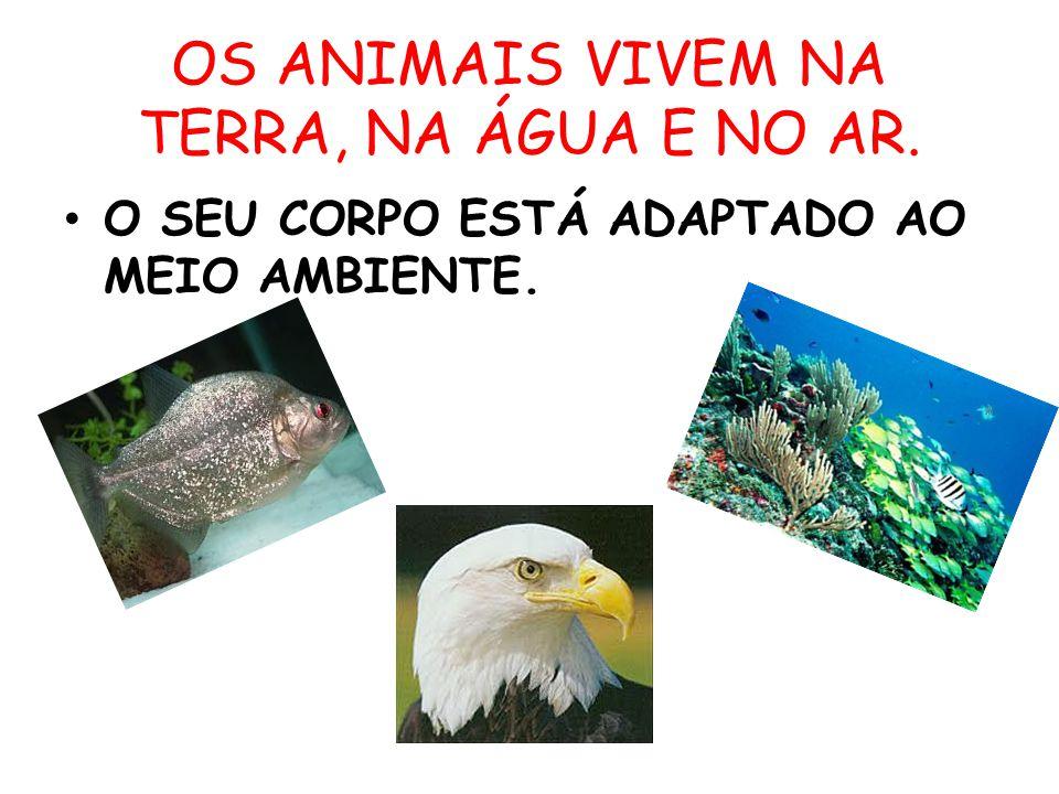 OS ANIMAIS VIVEM NA TERRA, NA ÁGUA E NO AR. O SEU CORPO ESTÁ ADAPTADO AO MEIO AMBIENTE.