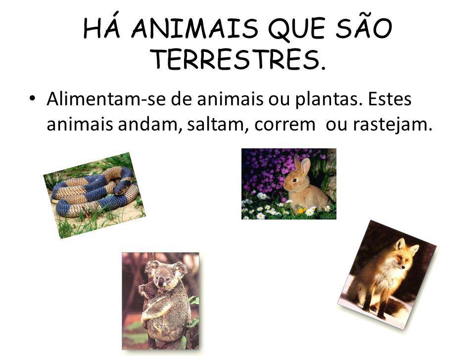 HÁ ANIMAIS QUE SÃO TERRESTRES. Alimentam-se de animais ou plantas. Estes animais andam, saltam, correm ou rastejam.